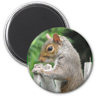 Curiously Cute 2 Inch Round Magnet