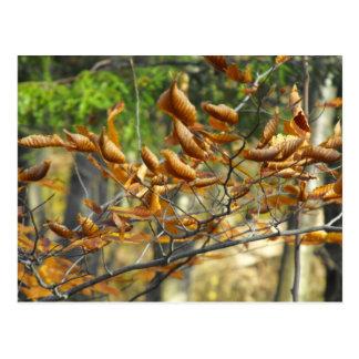 Curled Leaves Postcard