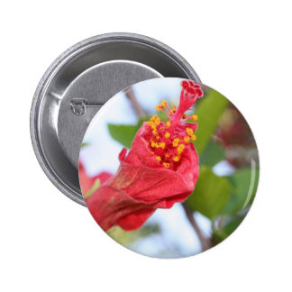 Curled Petals of A Red Hibiscus Bud 2 Inch Round Button