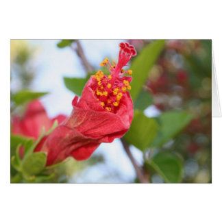 Curled Petals of A Red Hibiscus Bud Card