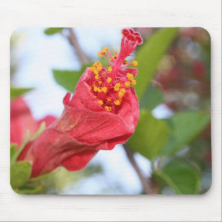 Curled Petals of A Red Hibiscus Bud Mouse Pad