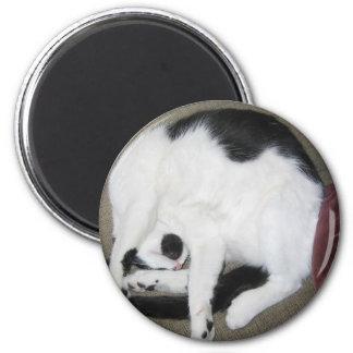 Curled-Up Cat Fridge Magnets