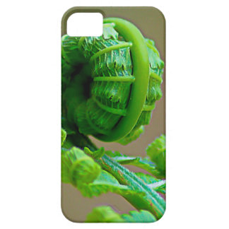 Curled up Fern iPhone 6 Case