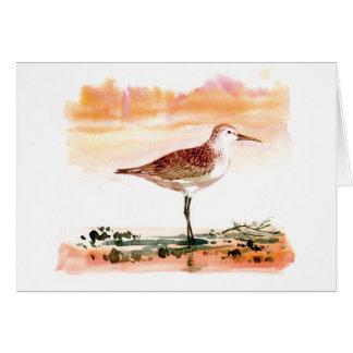 curlew sandpiper cards