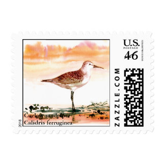 curlew sandpiper Curlew sandpiperCalidris ferr Postage Stamps