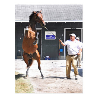 Curlin - Dyning Out Hip #13 Postcard