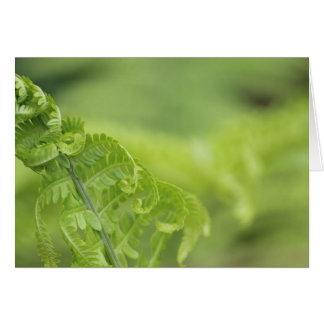 Curling Fern Leaves, Greenery, Blurred Background Card