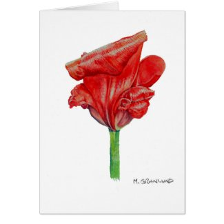 Curling Red Tulip Card