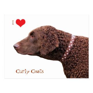 Curly Coated Retriever dog I love heart postcard