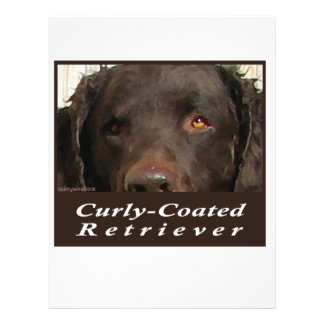Curly-Coated Retriever Flyer