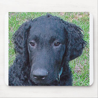 Curly_Coated_Retriever.png Mouse Pad