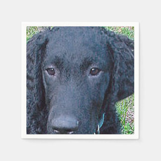 Curly_Coated_Retriever.png Paper Napkin