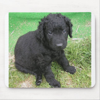 curly coated retriever puppy mouse pad