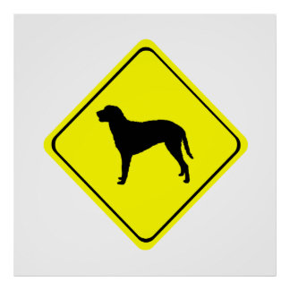 Curly Coated Retriever Warning Sign Love Dogs Poster