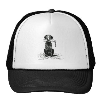 Curly Coated Retriever with Bumper Hat