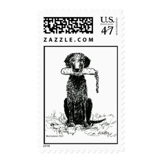 Curly Coated Retriever with Bumper Postage
