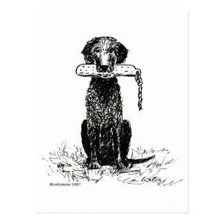Curly Coated Retriever with Bumper Postcard