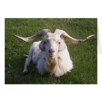 Curly Horn Goat Card