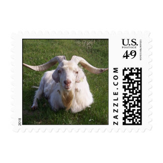 Curly Horn Goat Postage Stamp
