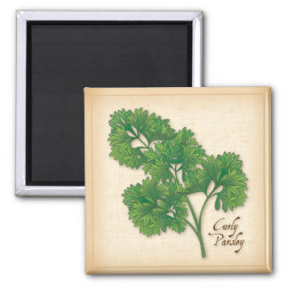 Curly Parsley Herb 2 Inch Square Magnet