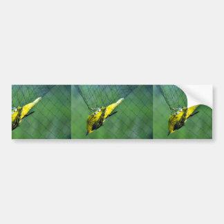 Curruca amarilla capturada en jerarquía de la nieb etiqueta de parachoque