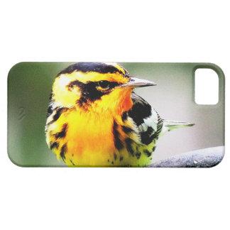 Curruca amarilla del plumaje de la primavera - caj iPhone 5 coberturas