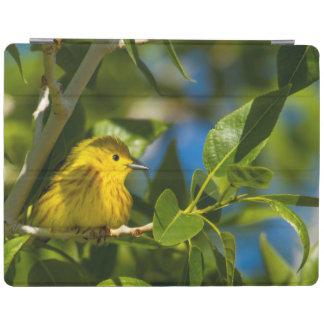 Curruca amarilla en árbol cerca de Augusta, Cover De iPad