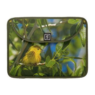 Curruca amarilla en árbol cerca de Augusta, Fundas Para Macbook Pro