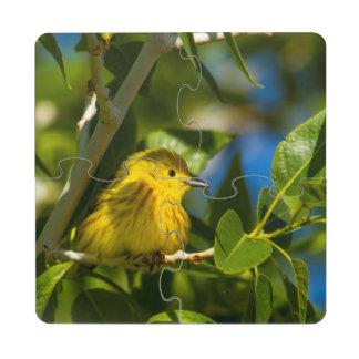 Curruca amarilla en árbol cerca de Augusta, Posavasos De Puzzle