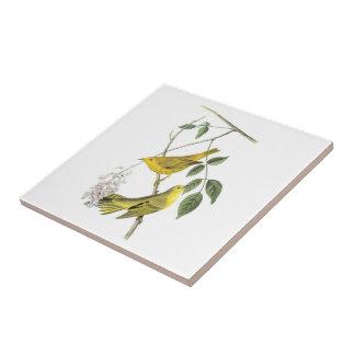 Curruca amarilla por Audubon Azulejo Cuadrado Pequeño