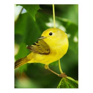 Curruca amarilla postal
