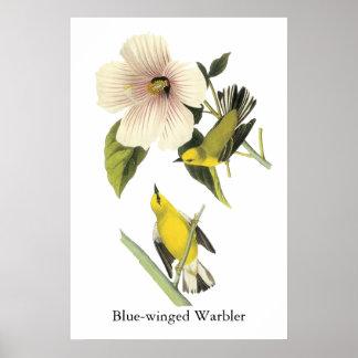 curruca Azul-coa alas Juan Audubon Impresiones