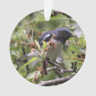 curruca azul Negro-throated