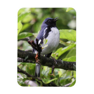 curruca azul Negro-throated Imanes Flexibles