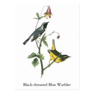 curruca azul Negro-throated, Juan Audubon Postales