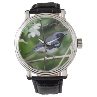curruca azul Negro-throated Relojes De Pulsera