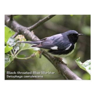 curruca azul Negro-throated Postal