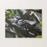 Curruca blanco y negro puzzles con fotos