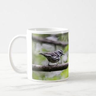 Curruca blanco y negro taza