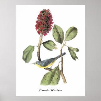 Curruca de Audubon Canadá Impresiones