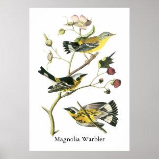 Curruca de la magnolia Juan Audubon Posters