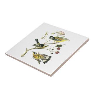 Curruca de la magnolia por Audubon Azulejo Cuadrado Pequeño
