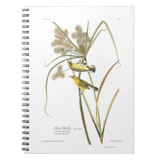 Curruca de la pradera de la placa 14 de Audubon Cuadernos