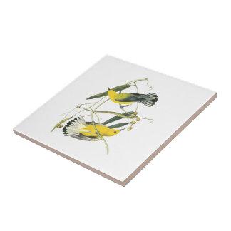 Curruca del protonotario por Audubon Azulejo Cuadrado Pequeño