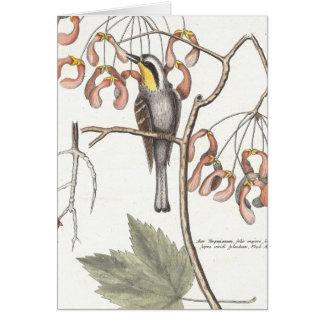 Curruca Throated amarilla/Seligmann - Catesby Tarjeta De Felicitación