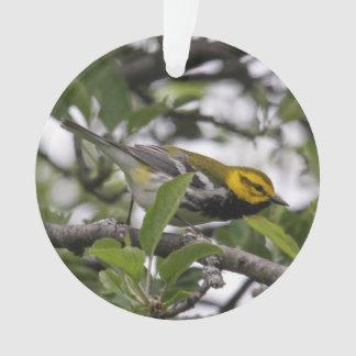 curruca verde Negro-throated