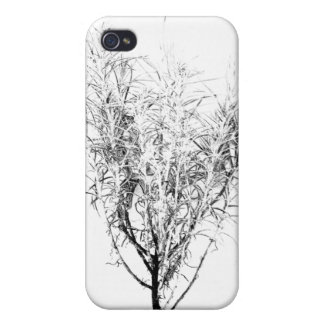 Curry Plant or Helichrysum angustifolium iPhone 4/4S Cover