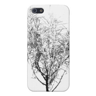 Curry Plant or Helichrysum angustifolium Case For iPhone 5
