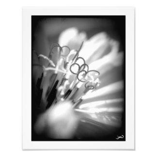Cursive Photo Print