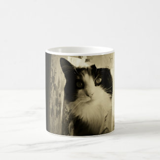 Curtain Calico Cat Magic Mug